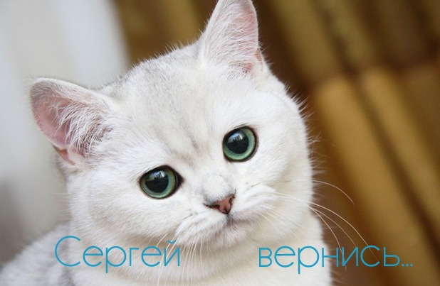 Сергей, вернись... открытка