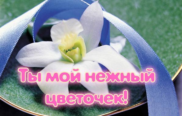 Картинки с надписями, Ты мой нежный цветочек!
