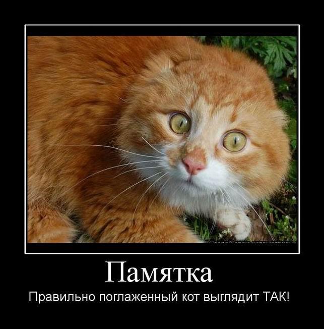 Как сделать так кот был счастливым 477